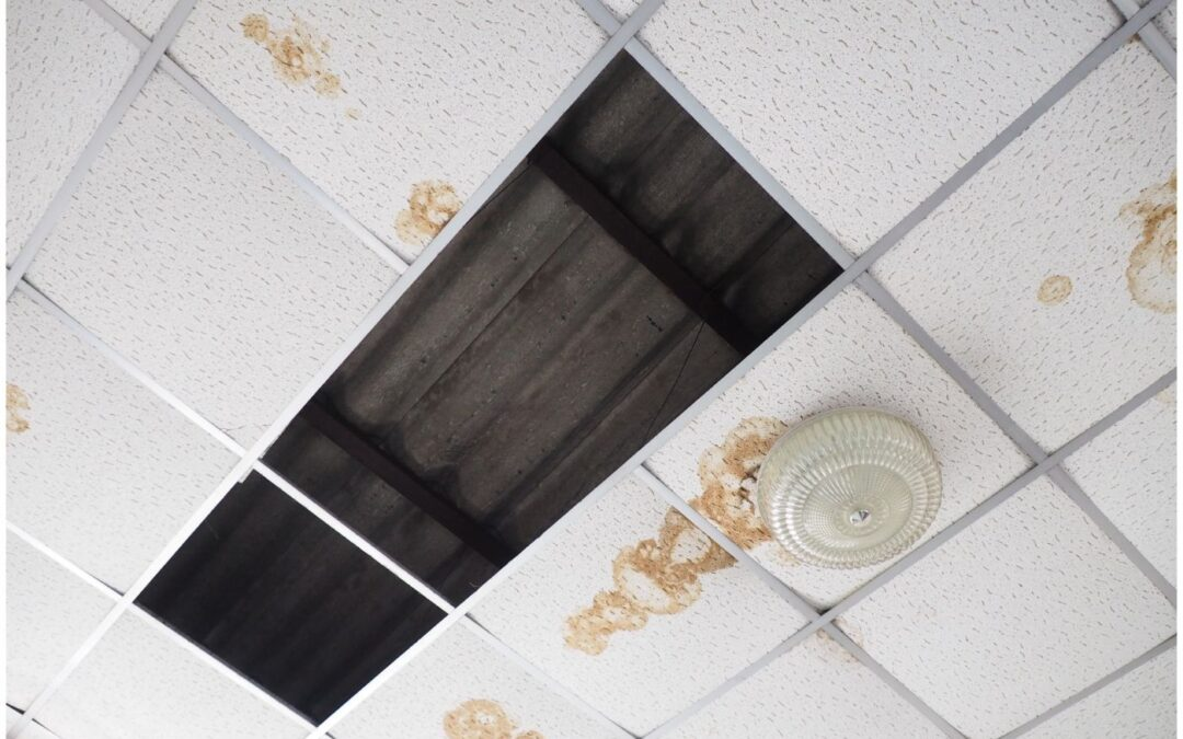 How to Find Commercial Mold Restoration and Removal in Phoenix
