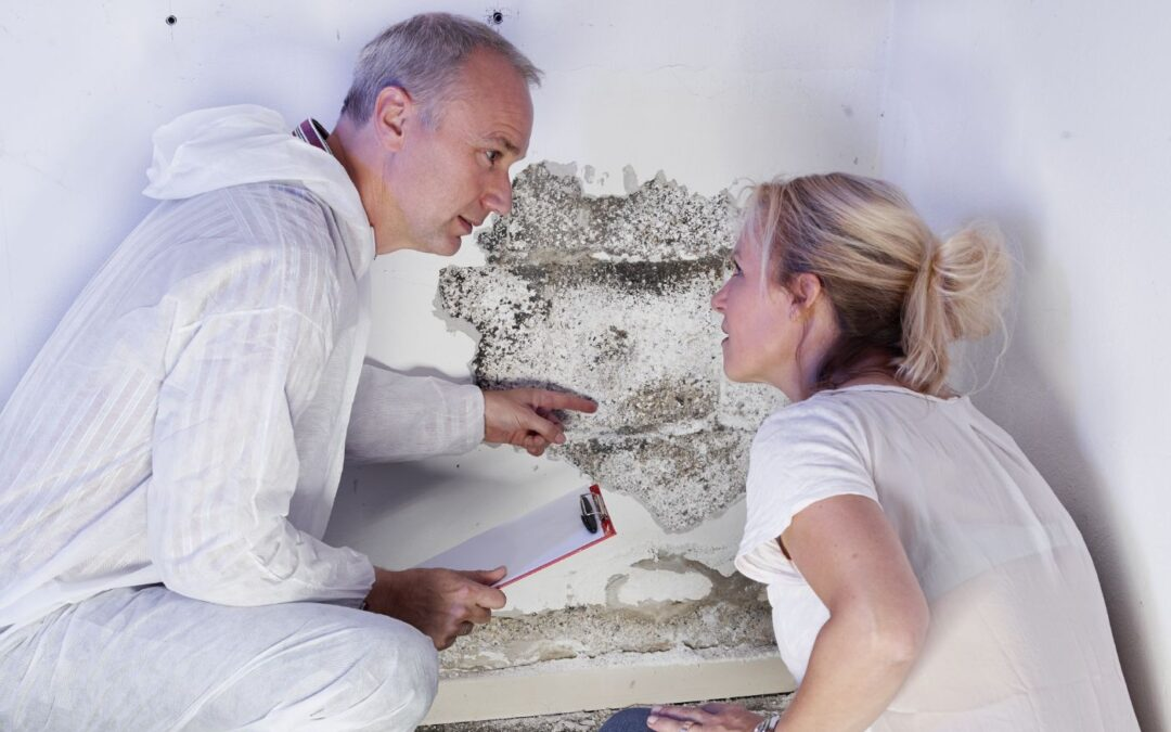 How to Choose a Professional Mold Removal Service in Phoenix